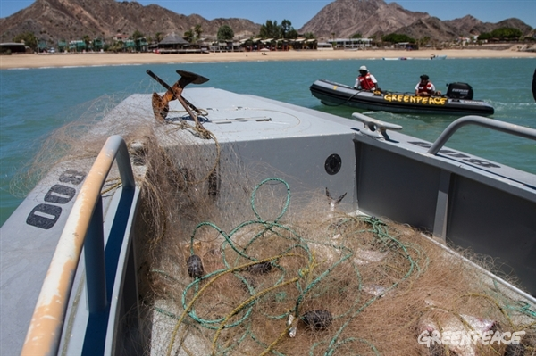 Illegal gillnets nets lay in a boat. © Carlos Aguilera/Greenpeace
