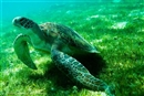 Ocean heroes in a half shell: it's World Turtle Day!