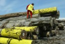 Greenpeace activists demand action by France