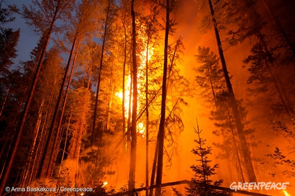 Forest Fires in Siberia, 2014