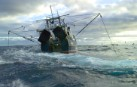 Greenpeace wants a moratorium on high seas bottom trawling