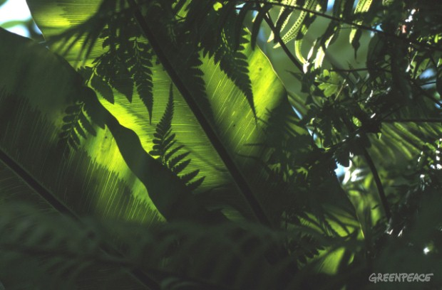 Green leaves and ferns.