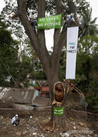 Activists atop a tree on Sankey road