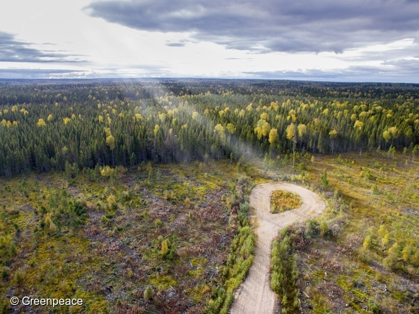 Clear-cut area and new road in Arkhangelsk region of Russia. 8 Sep, 2016  © Greenpeace