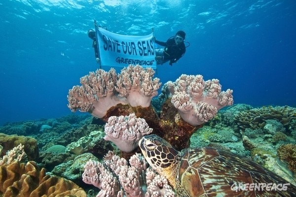 Reef Investigation in Apo Island  © Steve De Neef / Greenpeace