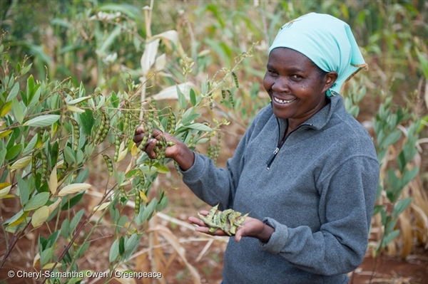 Francesca Kitheka from Kenya holds pigeon peas. In Kenya, farmers are effectively applying ecological farming practices that are increasing their ability to build resilience to and cope with climate change.