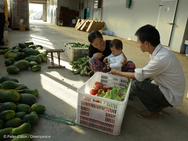 arm workers pack organic produce with their child at Shared Harvest Farm in Tongzhou, China.