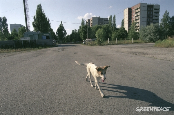 Stray Dog in Pripyat © Vaclav Vasku / Greenpeace