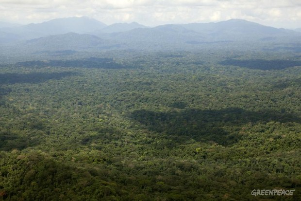 Rainforest Aerial Documentation, Cameroon.