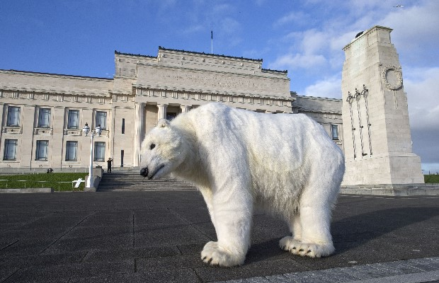A Greenpeace polar bear in front of the Auckland War Memorial Museum. The bear is in NZ to raise awareness that what's happening in the Arctic isn't staying in the Arctic and that the impacts of climate change are being felt around the world.