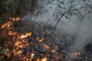 Forest Fires in Russia 2