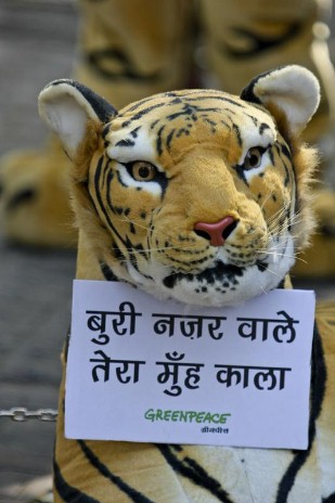 Tiger Action at Coal Ministry in India