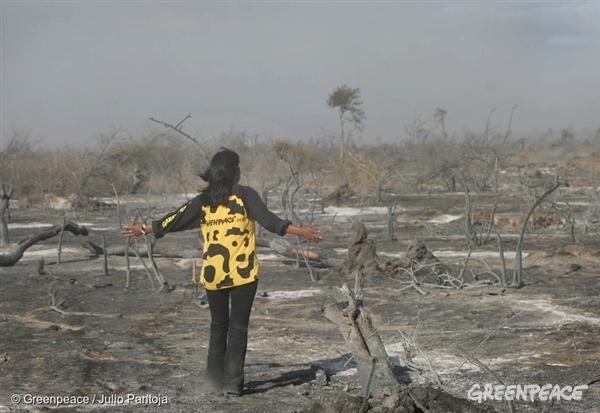 Forest Action Against Deforestation in Argentina