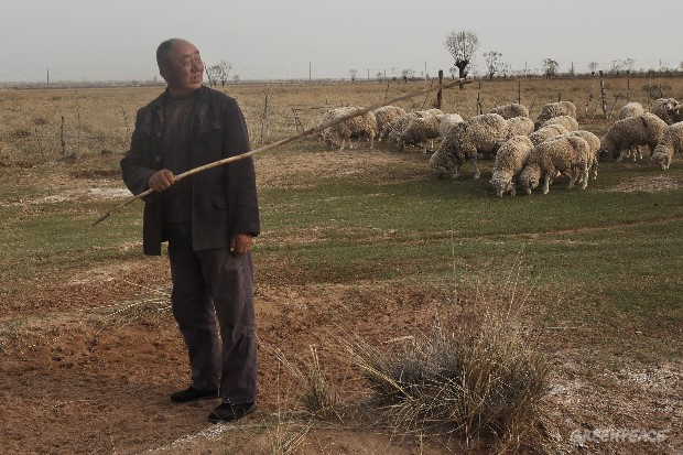 A Decade Of Struggle: The Ordos Grasslands