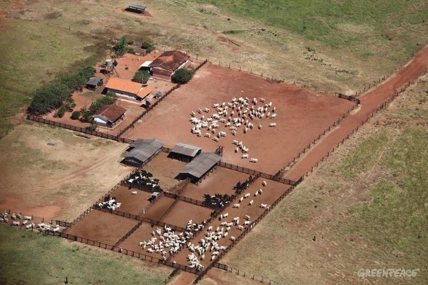 Amazon Cattle Farm