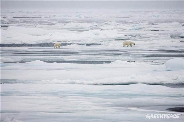 Arctic ice is melting at a rapid pace.