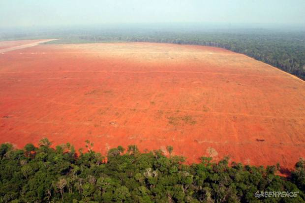 Illegal deforestation for soy production, in the North of State of Mato Grosso.