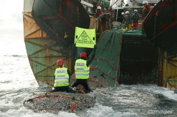 Greenpeace activists are hauled in with the catch from a bottom trawl.