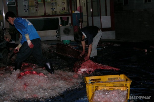 "A juvenile minke whale caught ""accidentally"" by a fishing vessel is butchered in Ulsan, Korea.  The meat was then sold for US$30,000. Korea reports an unusually high number of ""accidentally"" killed whales each year which are legally sold for meat."