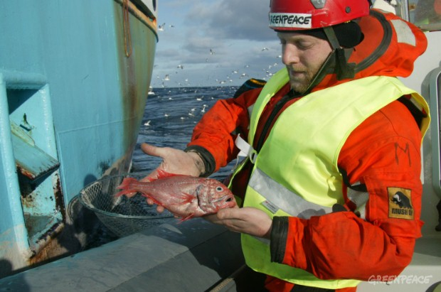 A Greenpeace activist holds an orange roughy that has been caught and killed by bottom trawling in the North Atlantic.