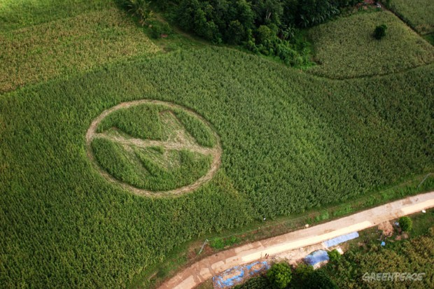 Aerial view of a crop circle made by local farmers and Greenpeace volunteers in Isabela province, 300 km northeast of Manila. The crop circle, with a slash over the letter 'M' symbolizes farmer's rejection of genetically-modified Bt corn crops from Mo...
