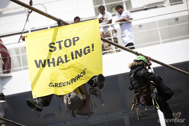 Action against Whale Meat in Hamburg