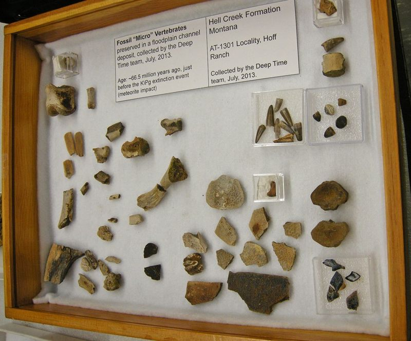 Fossil objects